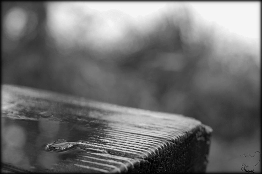 Blatt Pfütze Regen Schwarzweiß